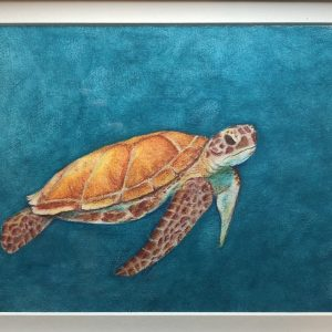 sea turtle colored pencil drawing fine art local artists