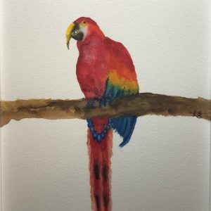 amazing parrot watercolor fine art paintings