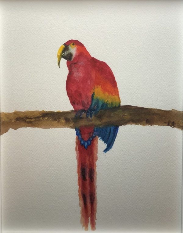 amazing parrot watercolor fine art paintings